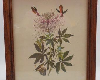 Framed Audubon Print Nice Frame!