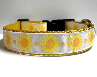 """1"""" Sunshine collar"""