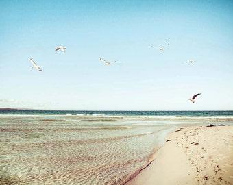 beach photography birds nautical decor birds in flight 8x10 11x14 24x36 fine art photography ocean bird flying aqua cream blue pastel summer