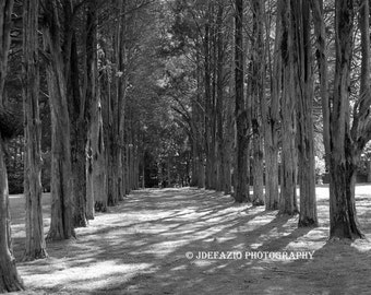 A Path Through The Woods Gunston Hall Virginia Black White Forest Trees Landscape Photography Print Canvas Art