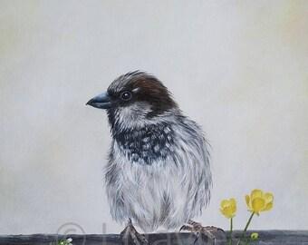 bird art print, bird print, sparrow artwork, sparrow painting, bird print, british bird print