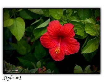 Hibiscus Black Framed Wall Art Photography