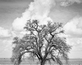 Black and White art, Oak tree Wall art, Home decor, Rustic, Living room decor, Nature Photography // California Mighty Oak Tree art print