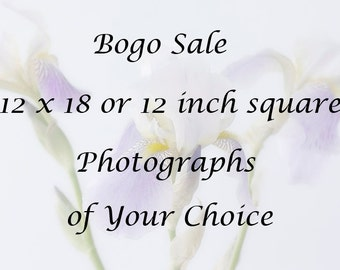 Bogo Sale, 12 x 12 or 12 x 18 Photographs of Your Choice, Buy One Photograph Get the Rest for  Half  Price