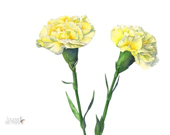 Carnation print, carnation watercolor, carnation painting, 5 by 7 size print, C11816, flower painting, flower print