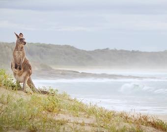 Kangaroo Photos, Australia Beach Photos, Beach photos, Kangaroos, Australia, Wildlife Photos Landscape, Beach Surf Kangaroo, Soft Pastels