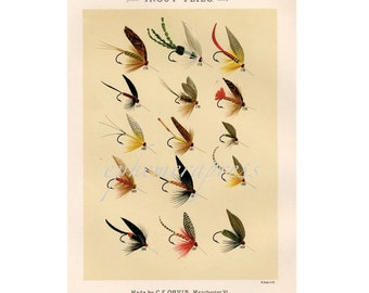 TROUT FLIES  glorious fly fishing print no. 3