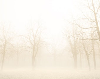 Nature photography, autumn photograph, bare trees, mist, forest, fog, landscape, magical, neutrals, minimalist, beige