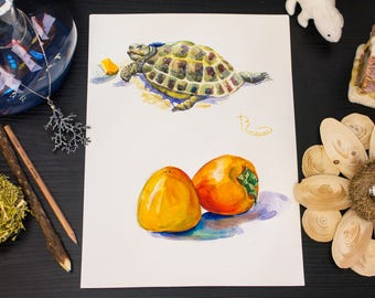 Turtle and Persimmon WATERCOLOR