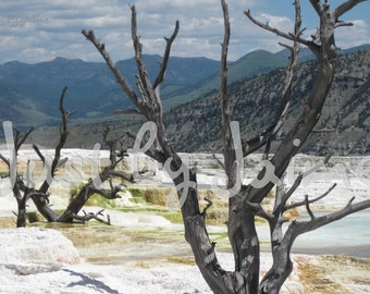 Mammoth Hot Springs professionally printed photo -- available in 5x7 or 8x10 (larger sizes by request) -- matte finish