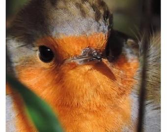 Mr Robin Red Breast - Blank Christmas Card