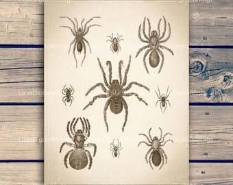 """Spider print, Antique insect print, Insect print vintage, Spider wall art, Insect illustration, Instant download art, 11""""x14""""; 8""""x10"""" 300dpi"""