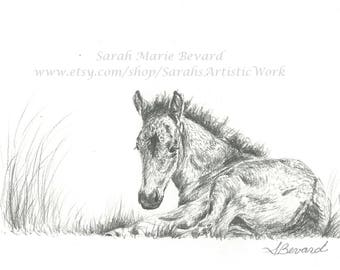 """Print of Original Graphite Drawing """"Filly"""" Horse Colt by Sarah Marie Glass Bevard"""
