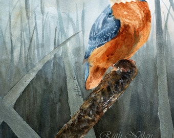 PROUD KINGFISHER mounted watercolour print by Ruth Nolan
