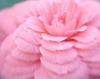 Pink photography dreamy flower artwork, floral photo print 12x12, modern wall art, pink Camellia, baby girl room wall decor bedroom wall art