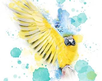 Blue & Gold Macaw Watercolour Print 11 x 14