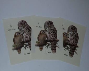 3 Owl book plate labels Antioch Bookplate Co paper supplies vintage ephemera unused