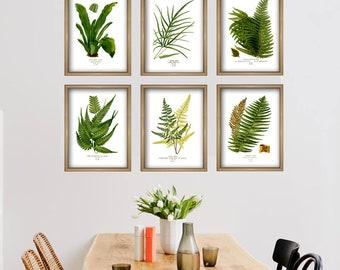 Fern Print Set of 6  - Botanical Illustration - Fern Wall Art - Fern Decor - Fern Gallery - Fern Collection - Botany Green Poster - Vintage