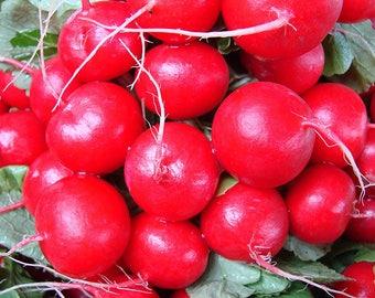 Radish seeds Dawn Ukraine Heirloom Vegetable Seeds average#939