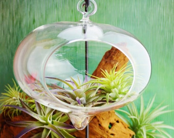 Heart Teadrop Terrarium ~ Glass Globe Hanging Orb - Orb Only or with Stand ~ DIY ~ Gift ~ Option with Black stand ~ See last photo