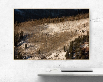 Aspen Trees, Colorado, Mountain, Photography Digital file, Download, Nature Photography, Stock, Printable art