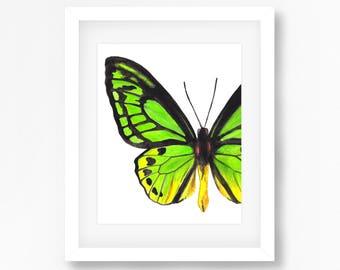 Wallace's Golden Wingbird Watercolor Fine Art Print
