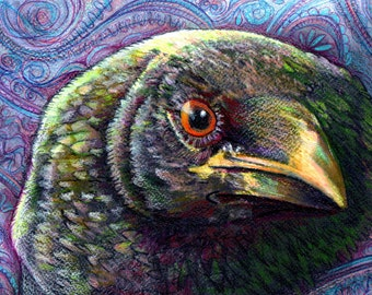 original art drawing 16x20 Green With Envy  colorful Raven crow zentangle