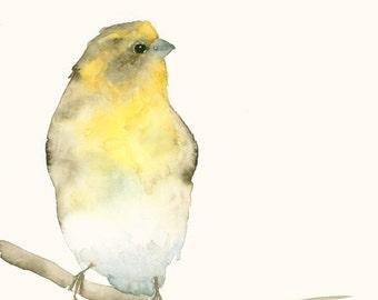 Bird Art Print from Original Watercolor Painting Yellow Finch