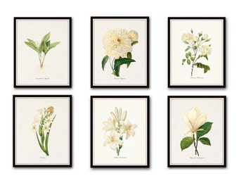 White Botanical Print Set No. 4, Botanical Print, Giclee, Art Print, Botanical Prints, Vintage Botanical, White Flower Prints, Rose, Peony