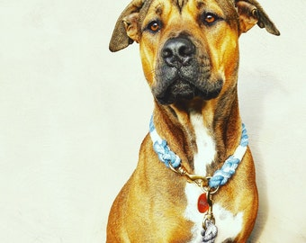 Royal Blue Ombré Rope Dog Collar