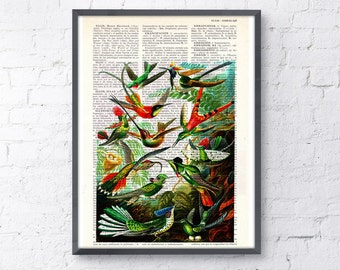 Hummingbirds Print on Vintage Dictionary Book altered art dictionary page illustration book print art ANI110