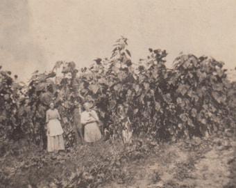 Original Vintage Farm Photo / American Family Farm Photograph / Sunflowers Snapshot / Antique / Nostalgic Photo / Americana / Family Photo