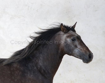 Horse Photography - FUEGO - Andalusian Horse  FineArt Print - Wall Decor