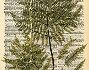 Vintage Book Print - Botanical Fern Art - Upcycled Antique Book Print - Natural History Floral Art Print