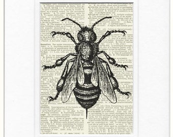 bee dictionary page print