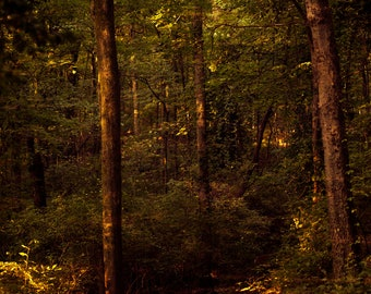 Fine Art Photography-Percy Warner Park - Nashville- Tennessee-wall art- print-trees-green-forest-home decor-path-8x12-