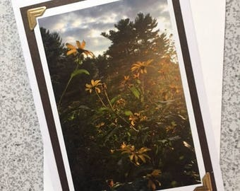 Black-eyed Susans - Handmade Greeting Card