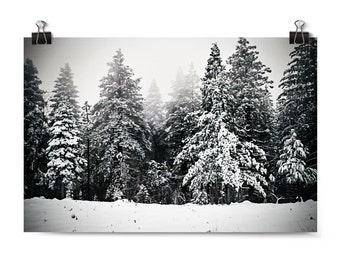 "Large Wall Art, Landscape Print, Winter Photography, Pine Trees, Snow, Winter Decor, Neutral Wall Art, Affordable Art, ""Pine Tree Paradise"""