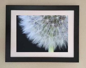 Feathery dandelion, Macro photography, Fine Art print, Ready to frame, nature photograph, wall print, decor