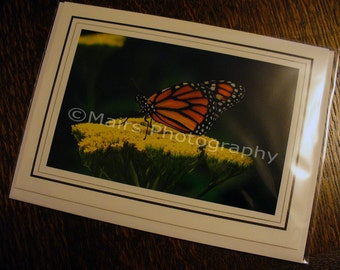 Butterfly Photography, Monarch, Orange Black White Green Yellow, All Occasion, Blank Greeting Card, Photo Card