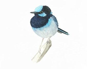 Blue Fairy Wren Bird Print, Superb Fairy Wren Watercolour Bird, Australian Native Bird Wall Art, A4 or 8 x 10 Print, Australian Artist