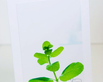 Mint Plant, Spring, Greeting Card, Photographic, Green, Fresh, Blank, Vertical
