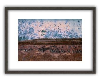 Brent Geese - art print - landscape - Giclée, canvas, framed or poster