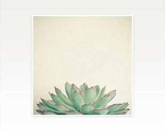 CLEARANCE SALE! Succulent Print, Plant Print - Echeveria