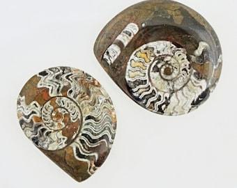 Pair of Polished Stones / Petrified Shells Fossils Nautilus