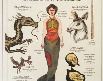 Book: Deyrolle - Fantastics Beasts Deyrolle Book - fantastic Creatures