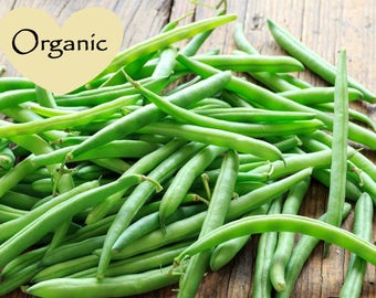 Blue Lake Bush Organic Non-GMO Green Beans, 30+ Organic seeds, Bush Beans, Organic garden Seeds, Vegetable Seeds, Organic gardening seeds