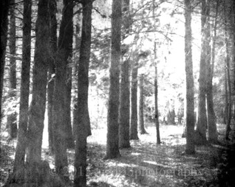 Black and White Forest Photograph, Trees, Fog, Mist, Sun, Landscape, Surreal, Spooky, 8x8 inch Fine Art Photograph print, Into The Mist