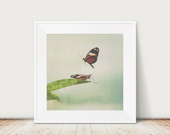 flying butterfly photograph insect photograph animal photography butterfly print insect print nursery wall art