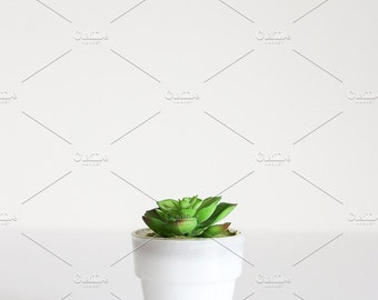 Photo en Stock de style | Petite plante grasse | Blog de stock photo, stock image, photographie, photographie blog